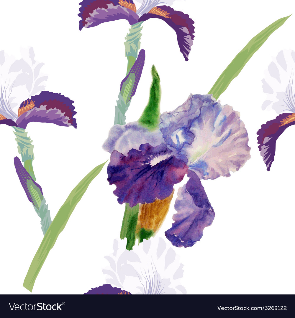 Seamless pattern with watercolor irises-01 vector | Price: 1 Credit (USD $1)