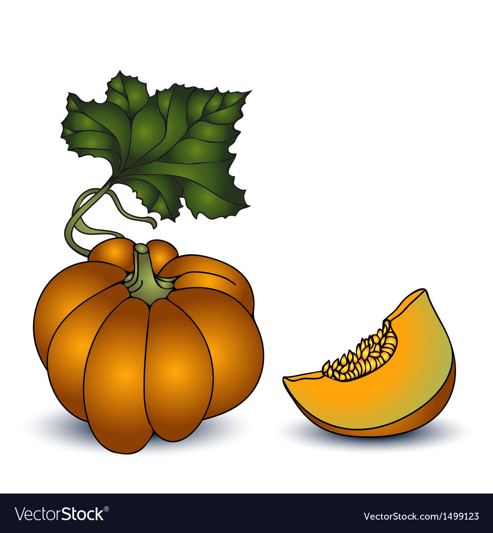 Autumn pumpkin on white background vector | Price: 1 Credit (USD $1)
