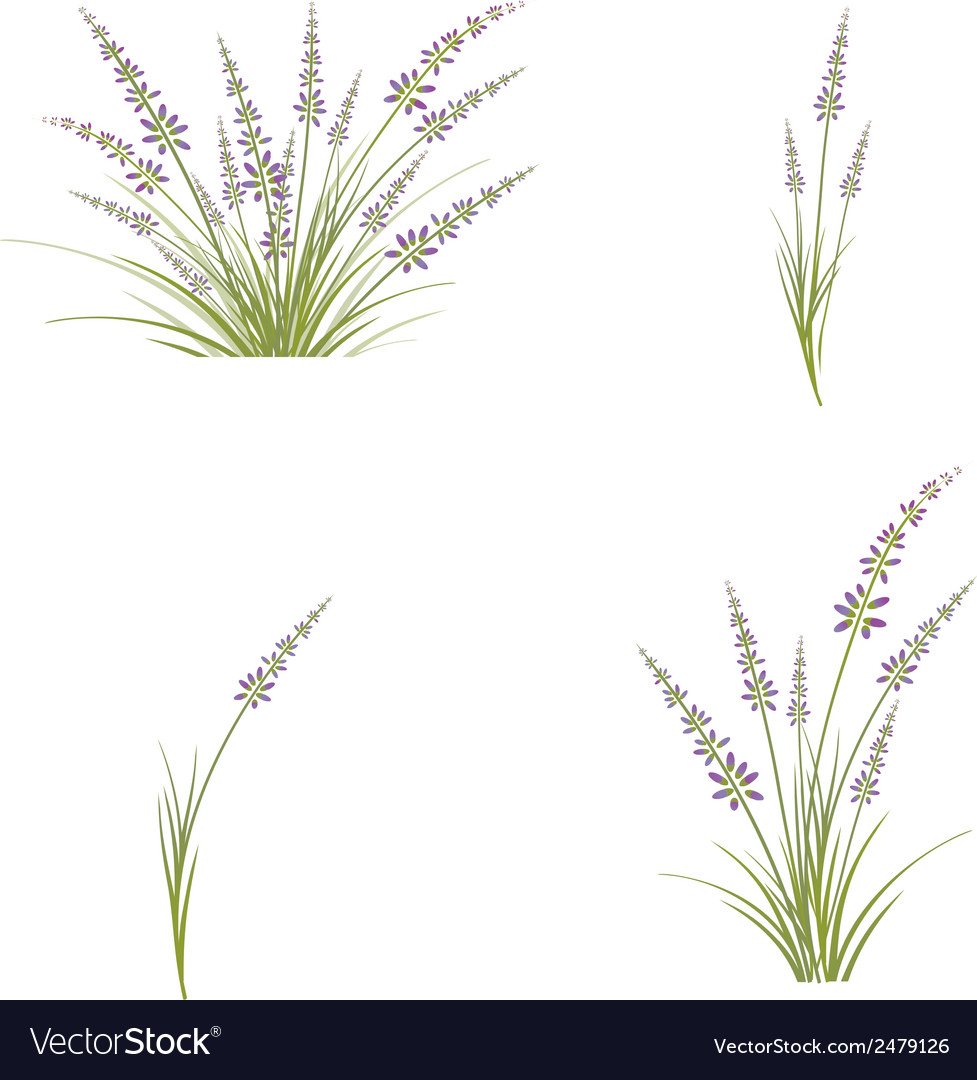 Lavender flower vector | Price: 1 Credit (USD $1)