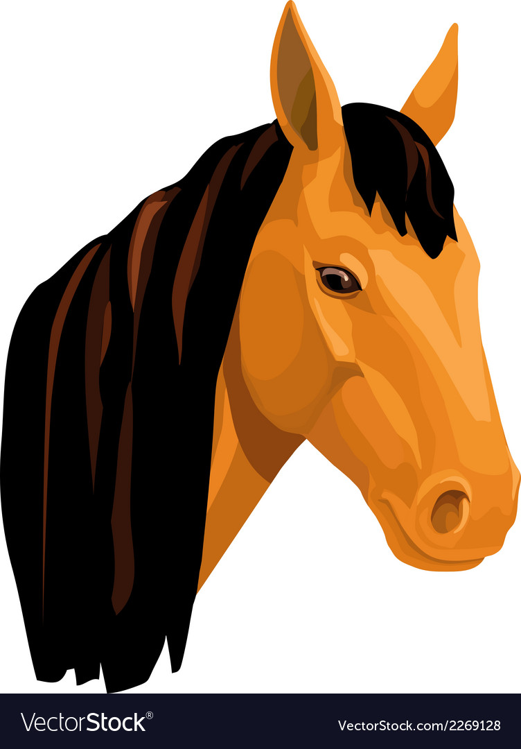 Light bay horse vector | Price: 1 Credit (USD $1)