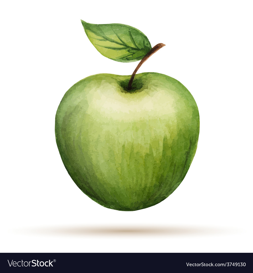 Watercolor apple isolated on white background vector | Price: 1 Credit (USD $1)