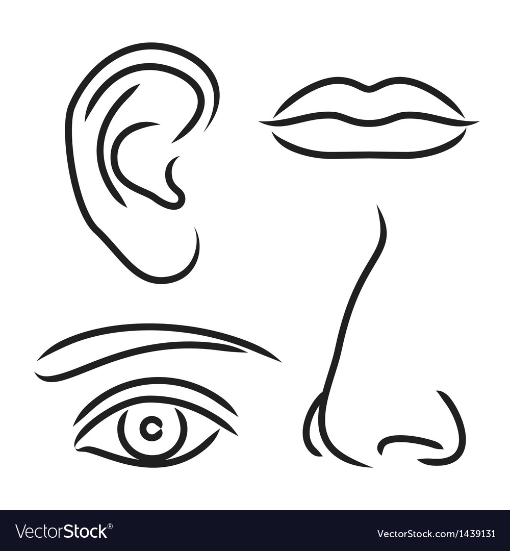 Nose ear mouth and eye vector | Price: 1 Credit (USD $1)
