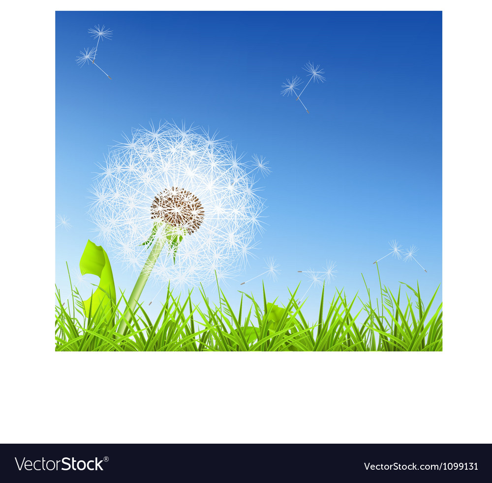 White dandelion vector | Price: 1 Credit (USD $1)