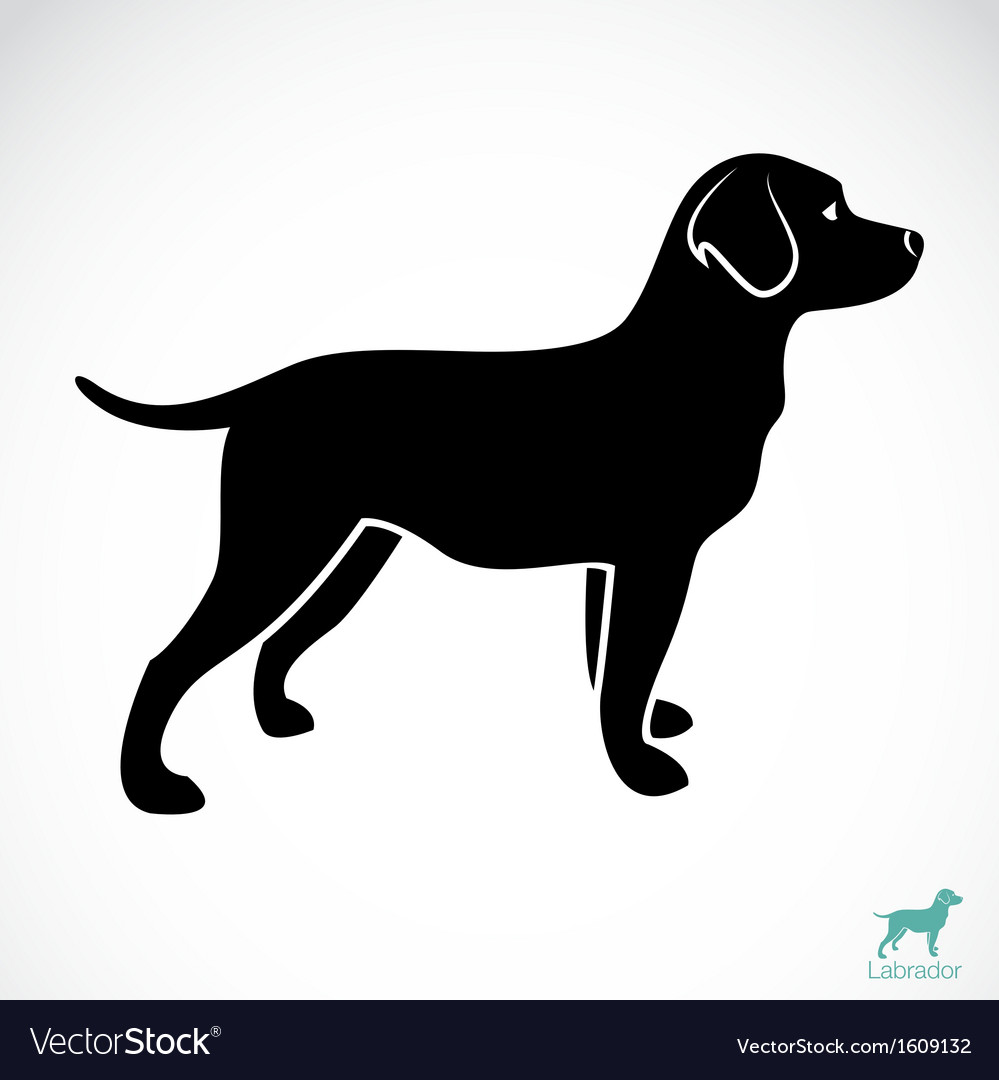 Dog labrador vector | Price: 1 Credit (USD $1)