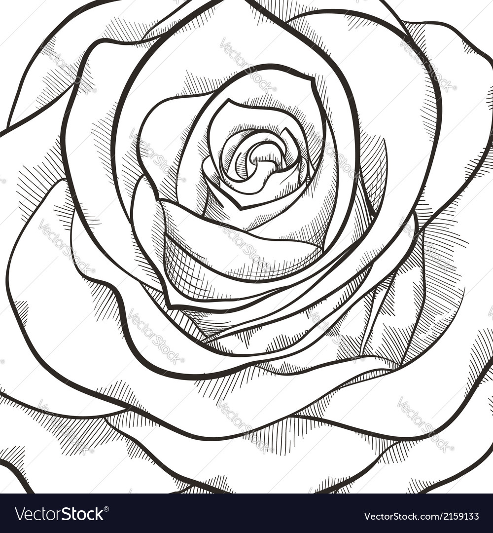 Background with beautiful black and white rose vector | Price: 1 Credit (USD $1)