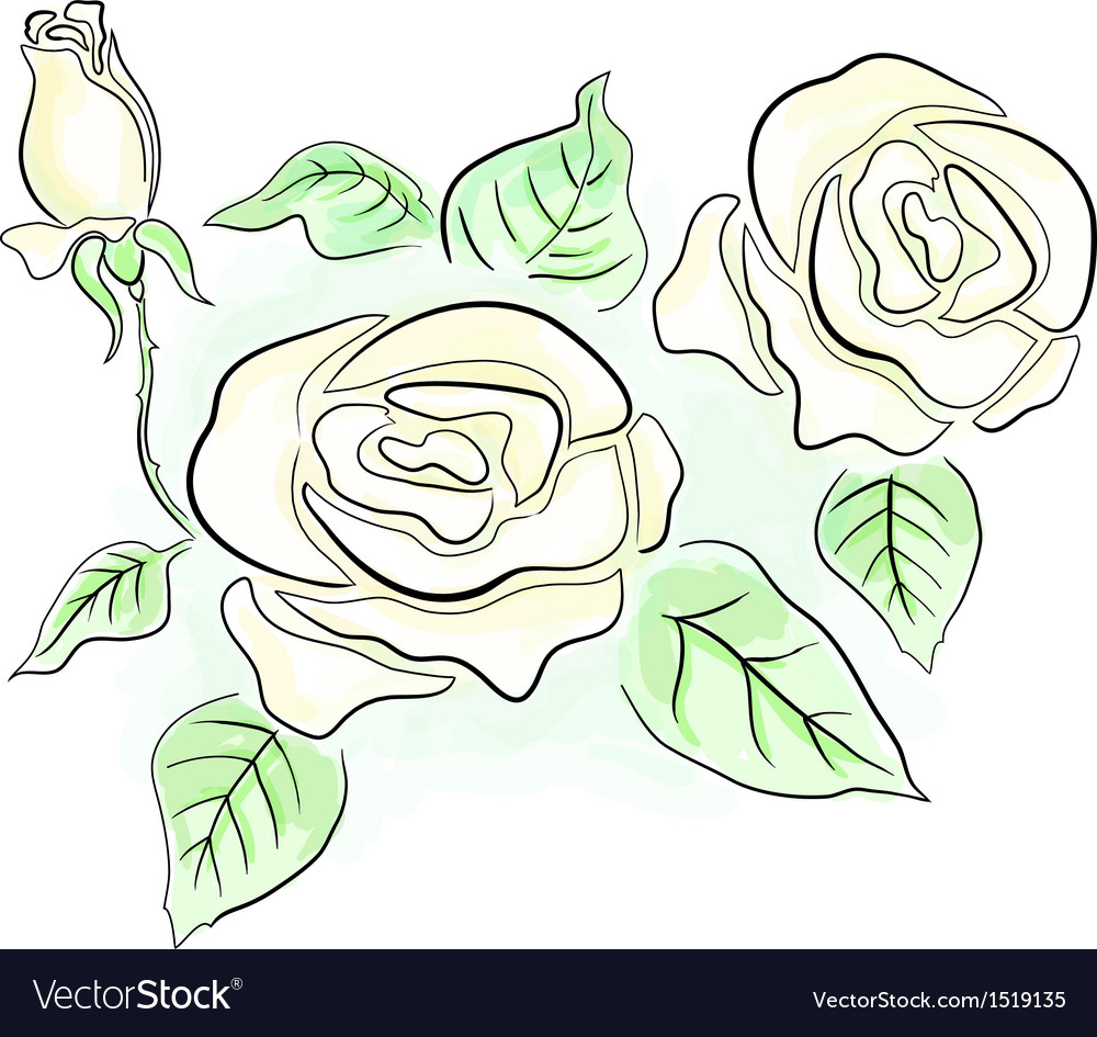 White roses vector | Price: 1 Credit (USD $1)