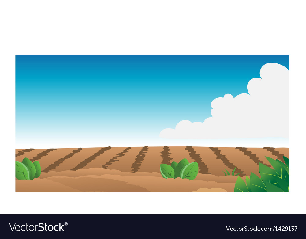 Farm field vector | Price: 1 Credit (USD $1)