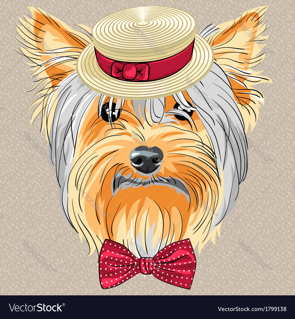 Hipster dog yorkshire terrier vector | Price: 1 Credit (USD $1)