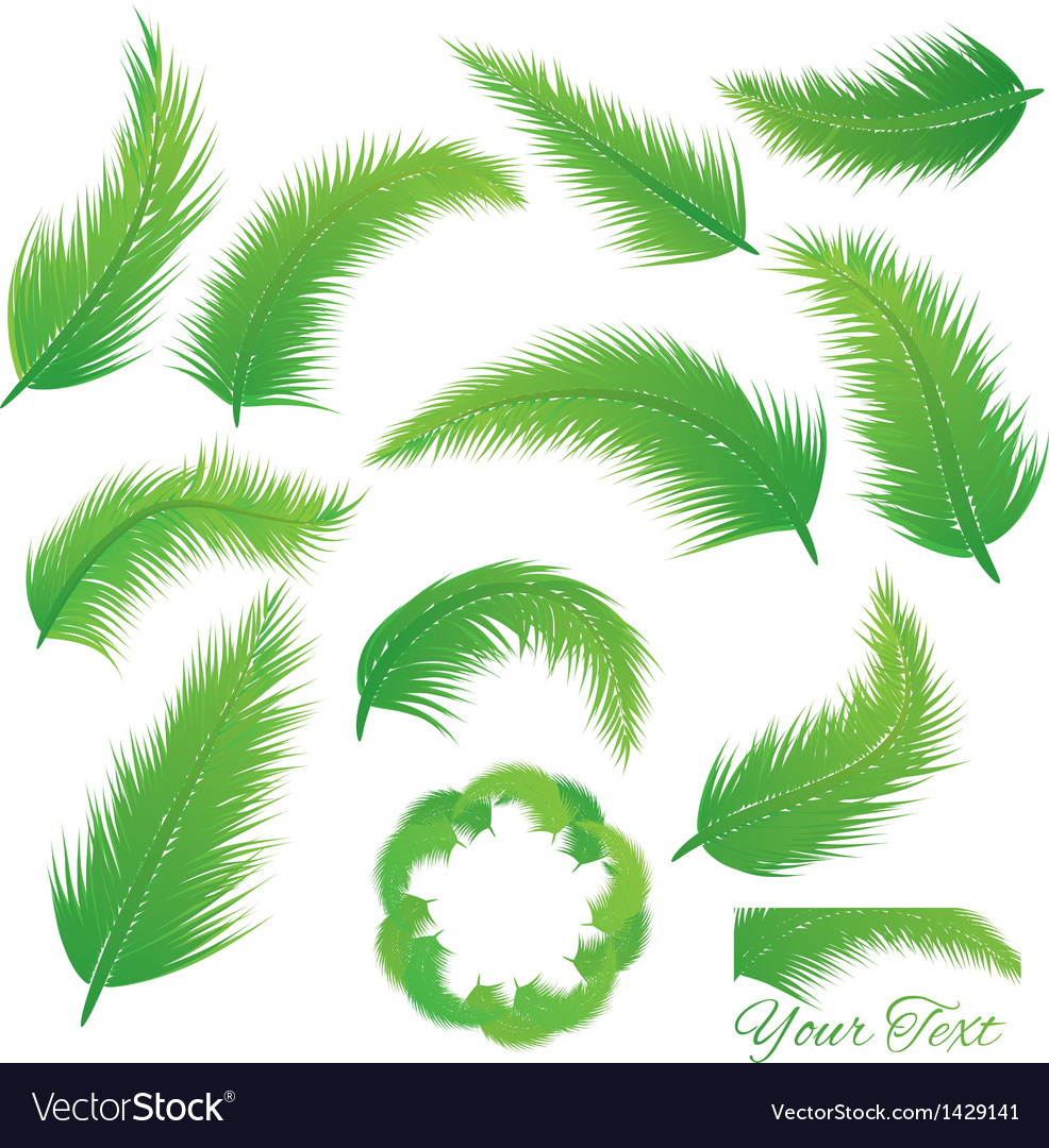 Coconut leaf vector | Price: 1 Credit (USD $1)