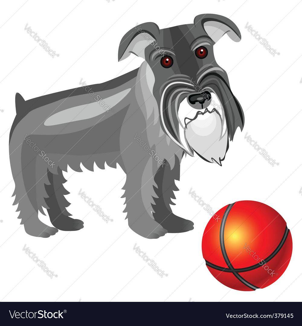 Miniature schnauzer dog vector | Price: 1 Credit (USD $1)