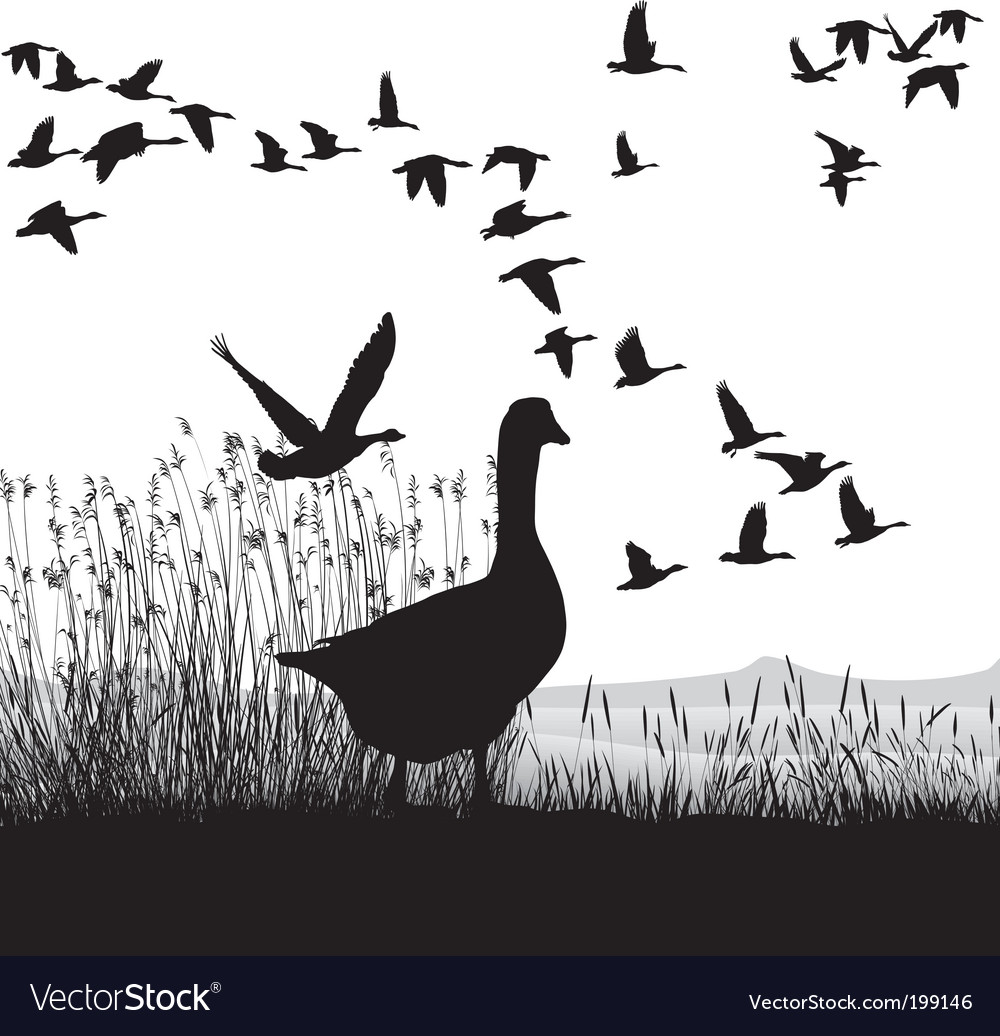 Before migrating geese vector | Price: 1 Credit (USD $1)