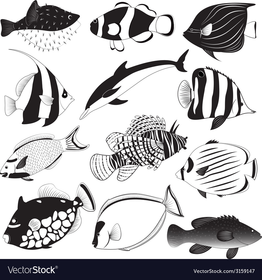 Marine fish collection vector | Price: 1 Credit (USD $1)