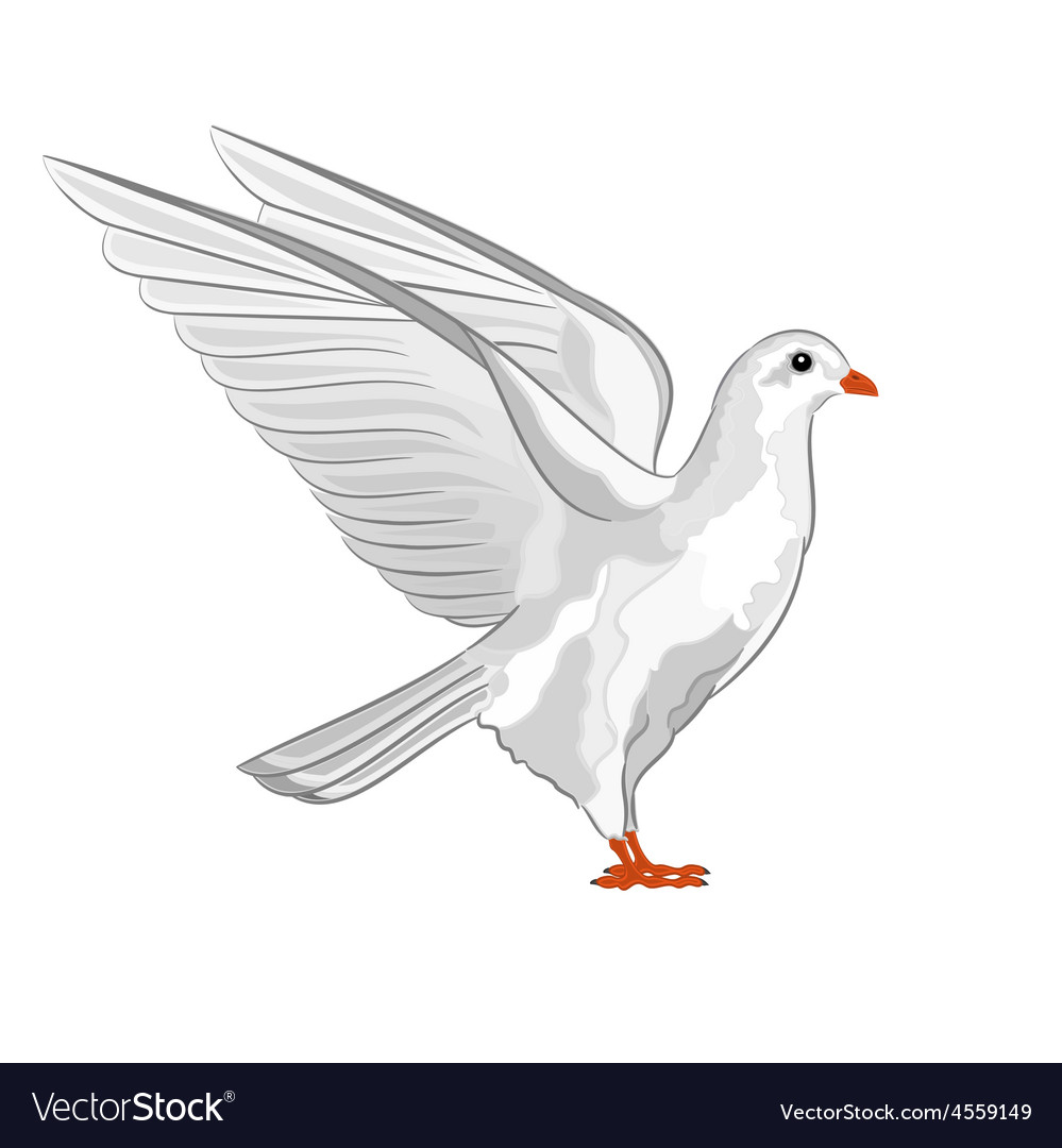 Dove white pigeon symbol peace vector | Price: 1 Credit (USD $1)