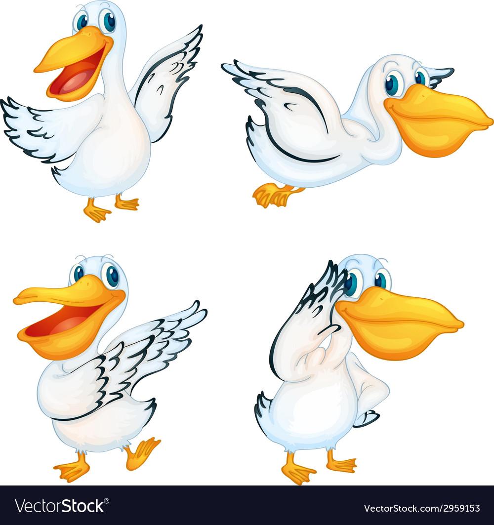 Pelicans vector | Price: 1 Credit (USD $1)