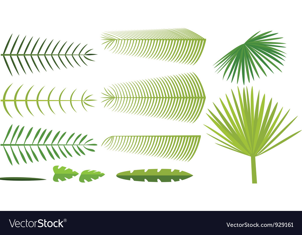 Set of palm leaves vector | Price: 1 Credit (USD $1)