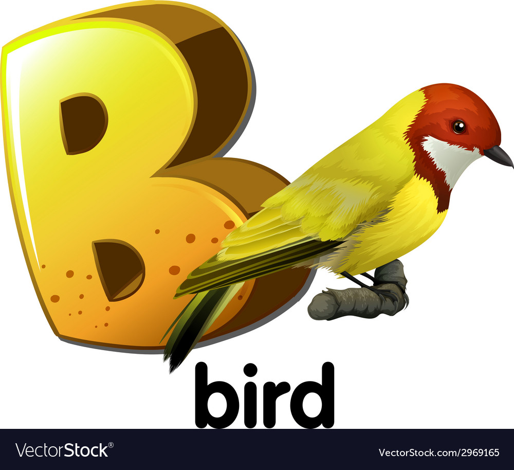A letter b for bird vector | Price: 1 Credit (USD $1)