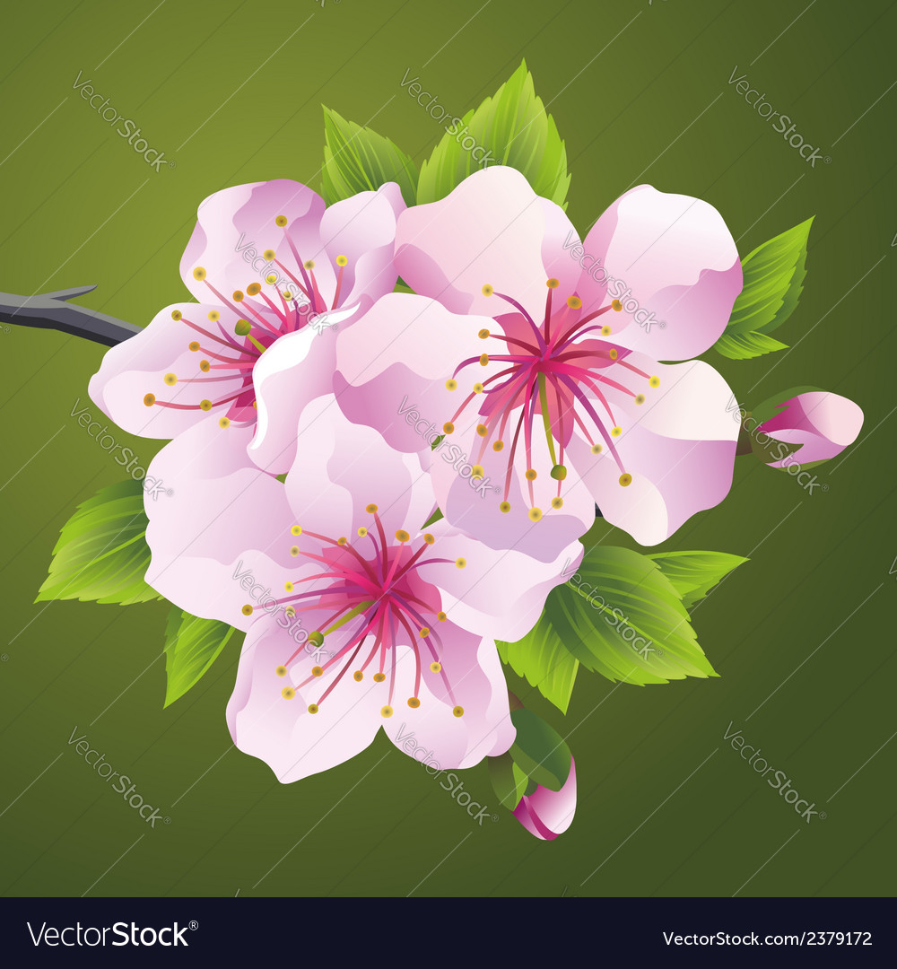 Blossoming branch of japanese tree sakura vector | Price: 1 Credit (USD $1)
