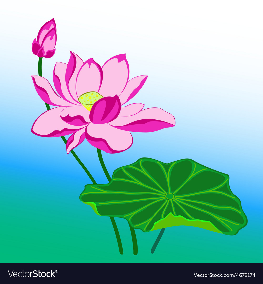 Pink lotus flower vector | Price: 1 Credit (USD $1)
