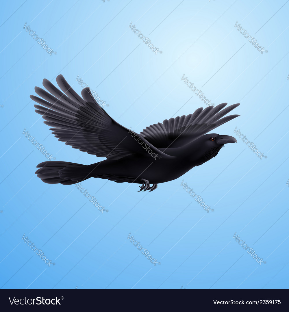 Black raven vector | Price: 1 Credit (USD $1)