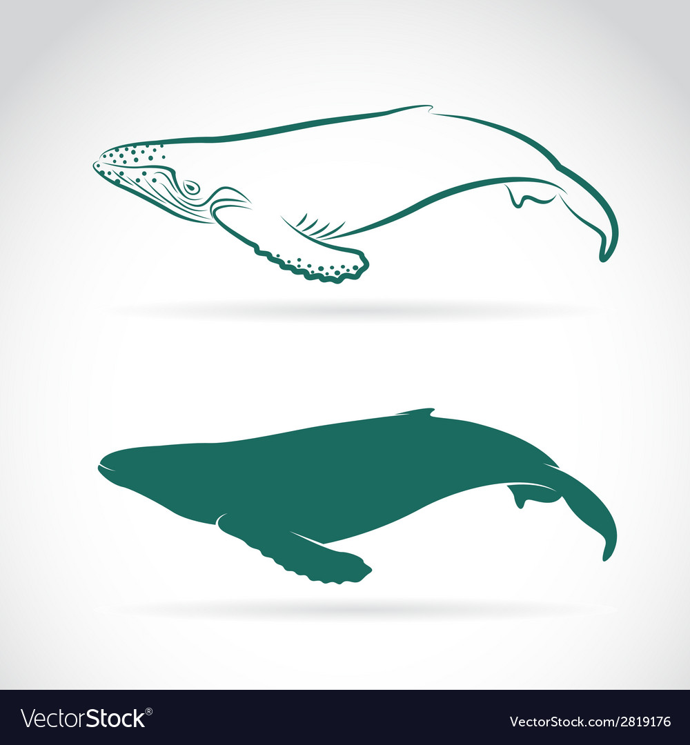 Image of whale vector | Price: 1 Credit (USD $1)