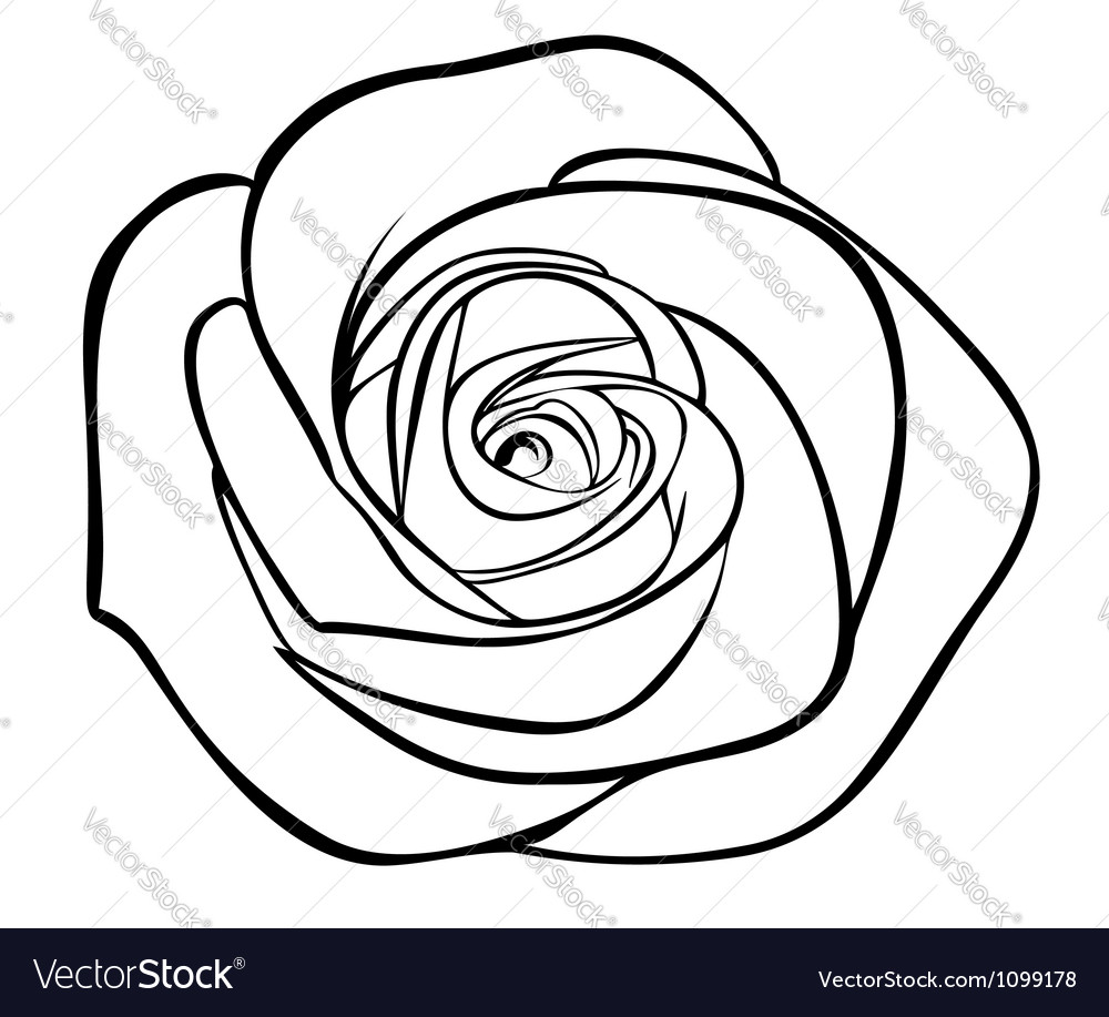 Black silhouette outline rose isolated on white vector | Price: 1 Credit (USD $1)