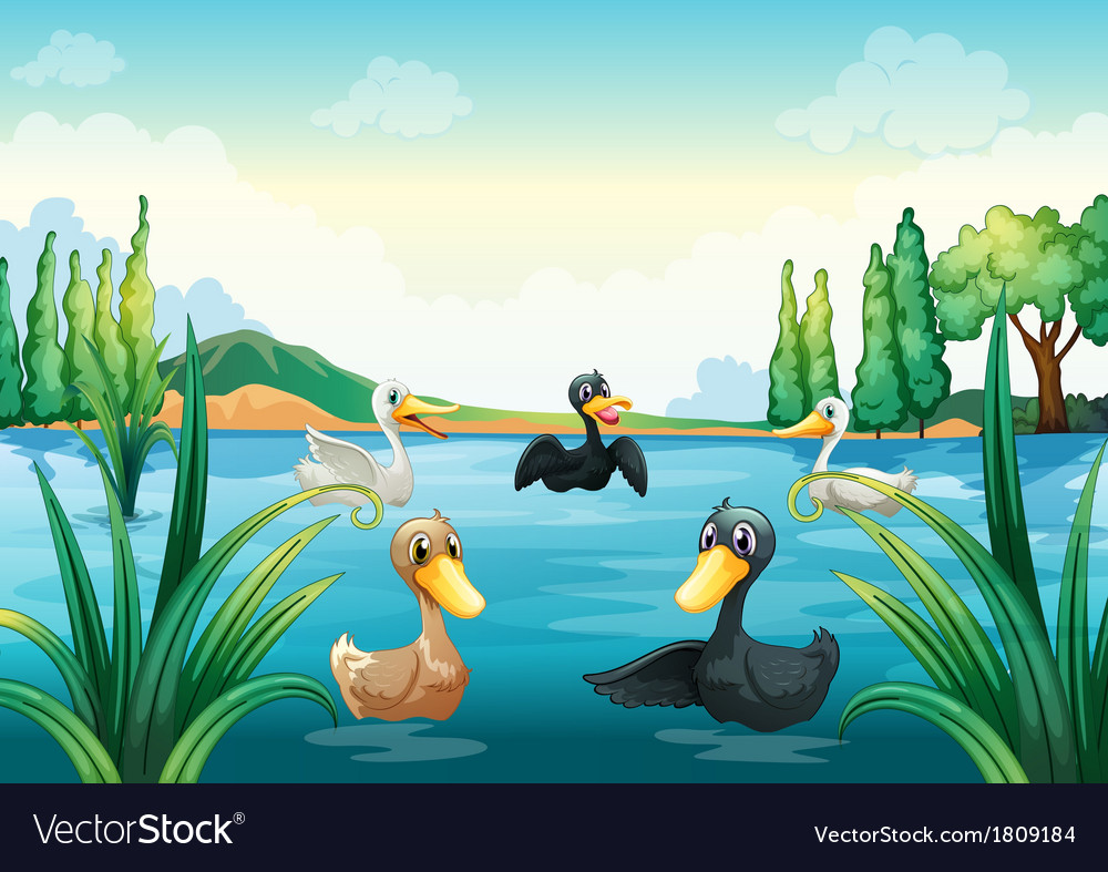 A group of aquatic birds at the pond vector | Price: 1 Credit (USD $1)