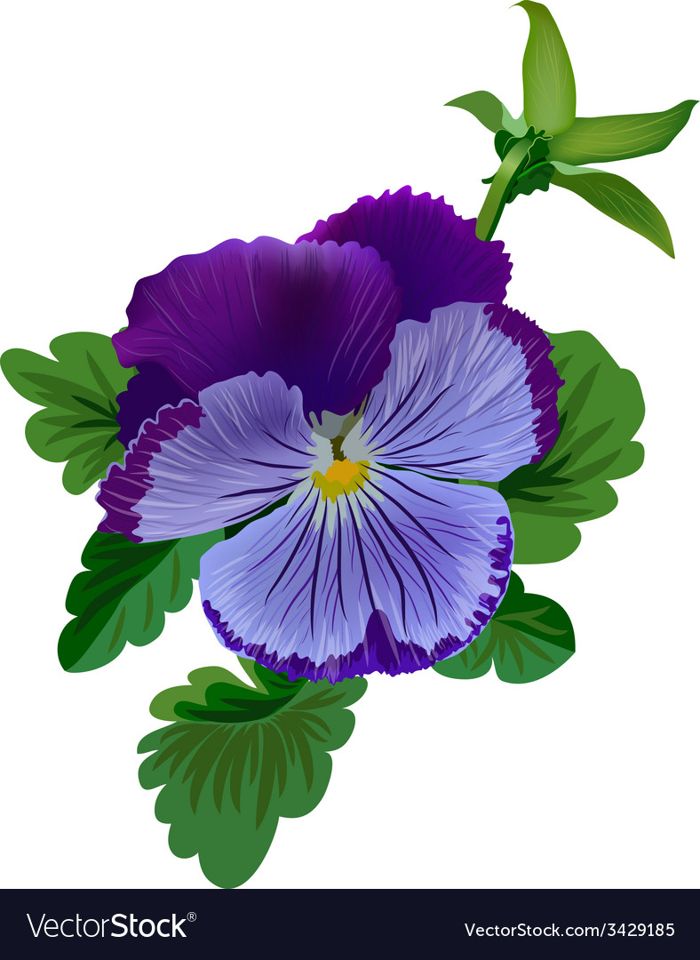 Violet pansy flower with leaves and bud vector | Price: 1 Credit (USD $1)