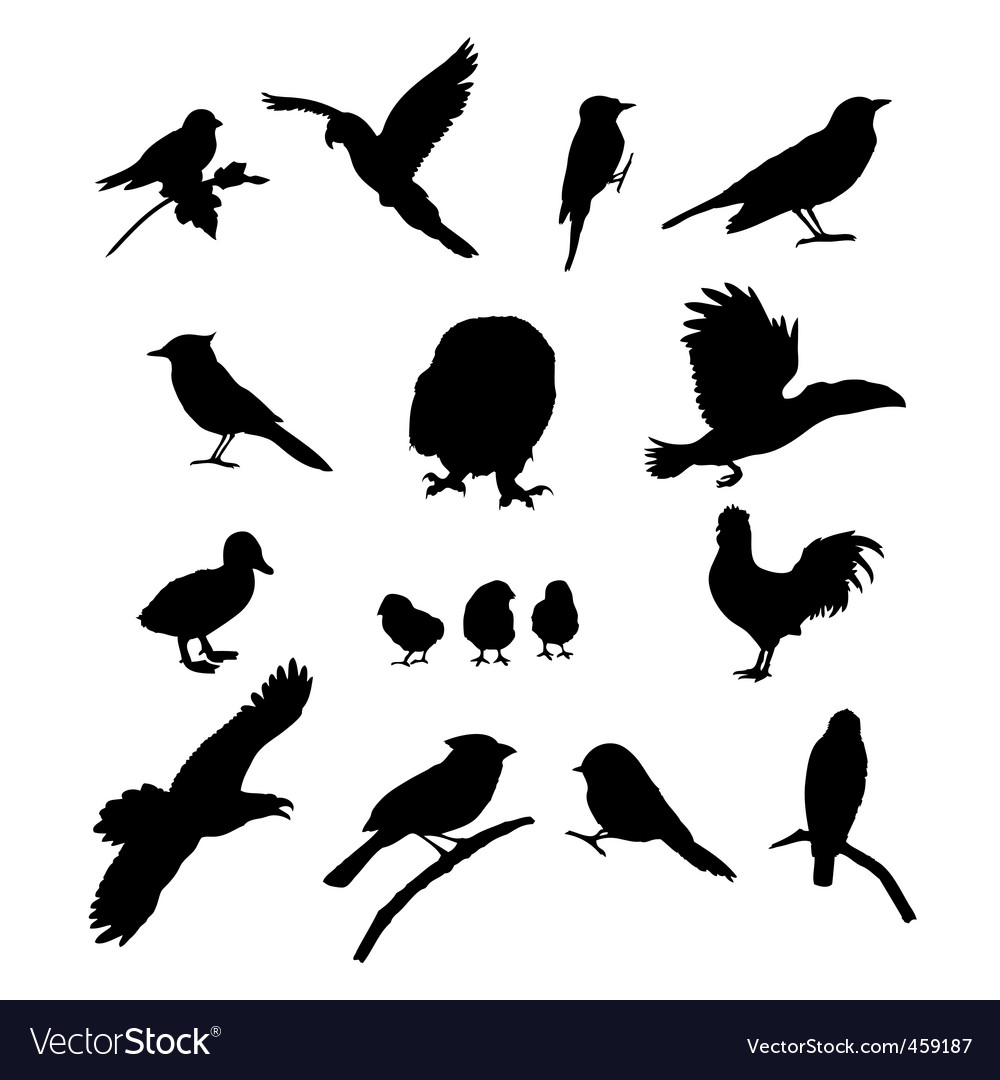 Birds collection vector | Price: 1 Credit (USD $1)
