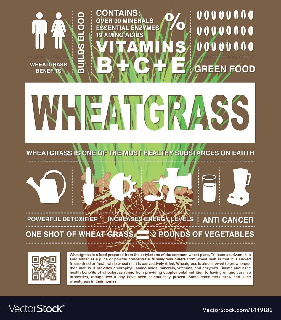 Wheatgrass info graphic vector | Price: 1 Credit (USD $1)