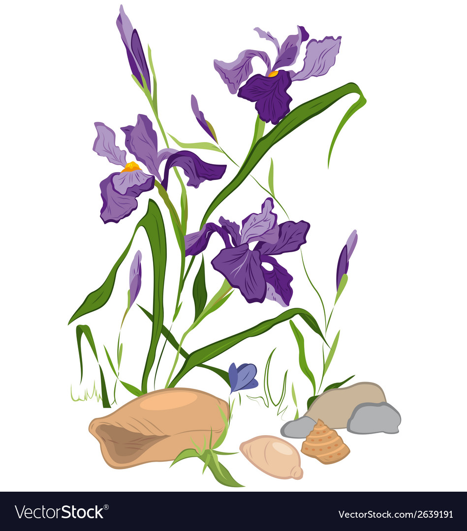 Hand drawn iris blooms vector | Price: 1 Credit (USD $1)