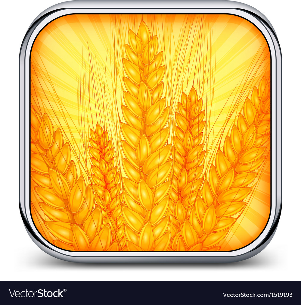 Square icon with ear wheat vector | Price: 3 Credit (USD $3)
