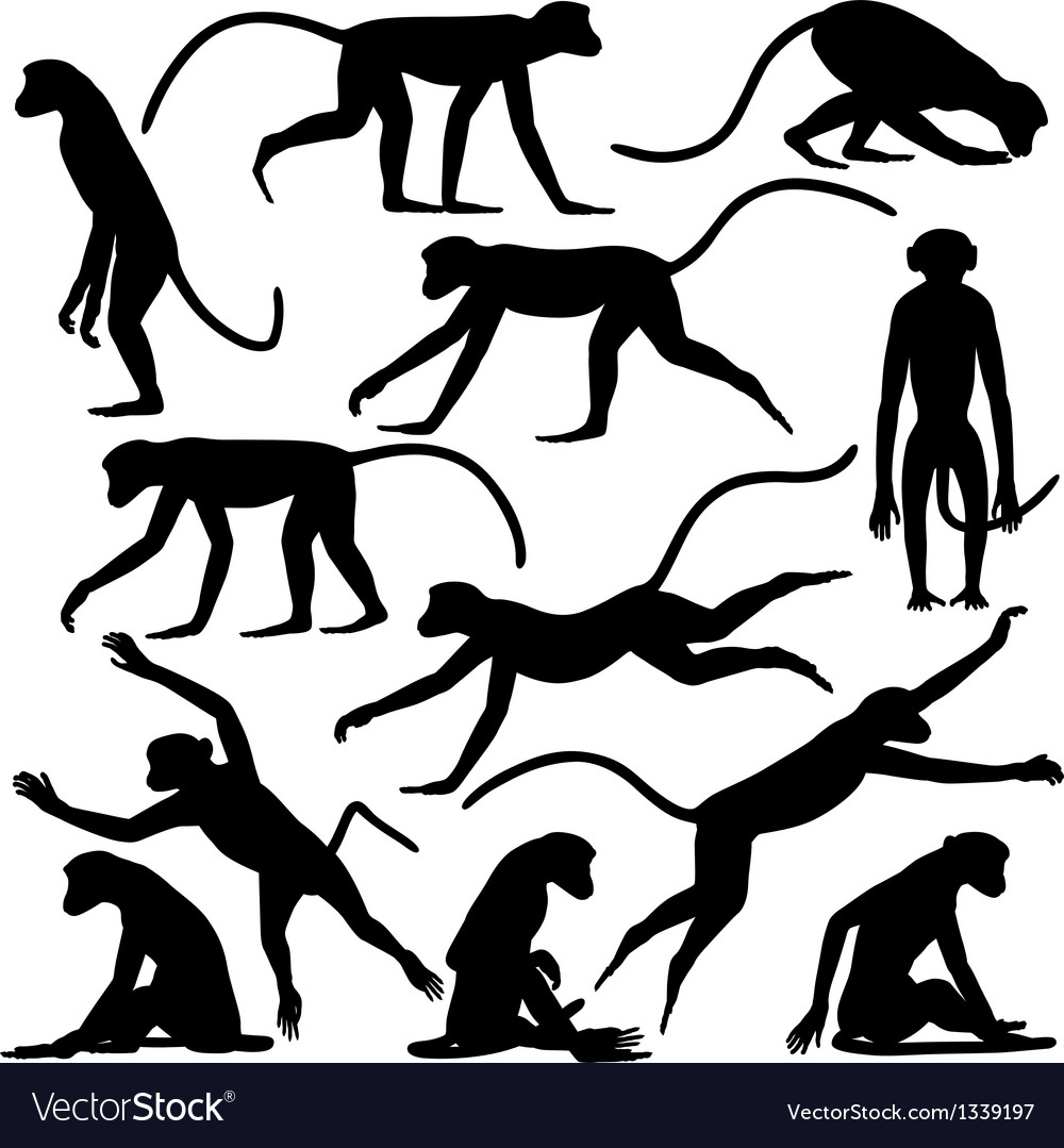 Monkey poses vector | Price: 1 Credit (USD $1)