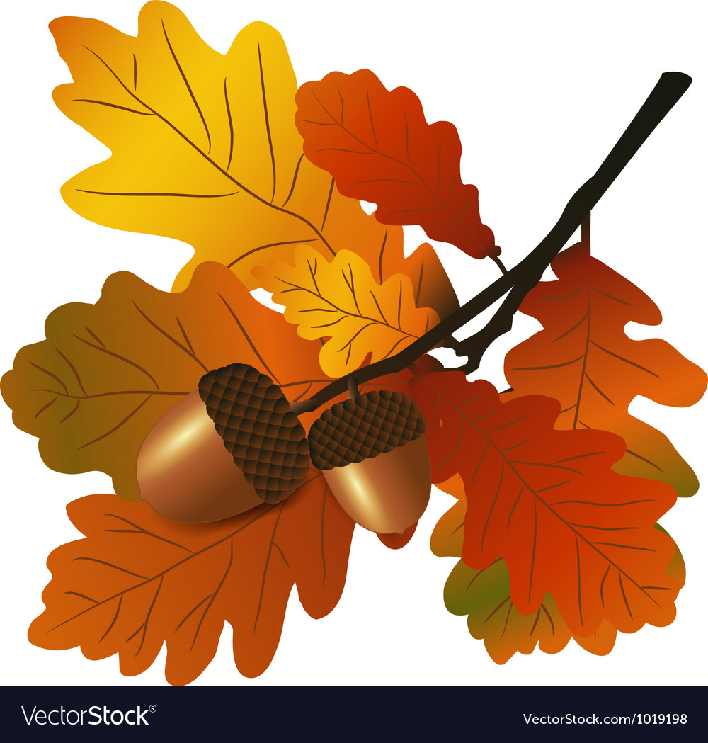 Oak branch with acorns vector | Price: 1 Credit (USD $1)