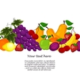 Fruit design borders isolated on white vector