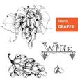 Grapes set of vector