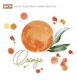 Handmade watercolor orange for retro design vector
