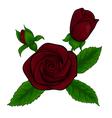 Bouquet red roses decorative floral design element vector