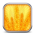 Square icon with ear wheat vector