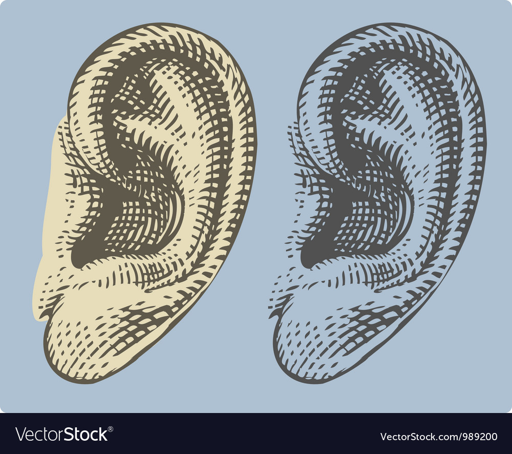 Human ear in engraved style vector | Price: 1 Credit (USD $1)