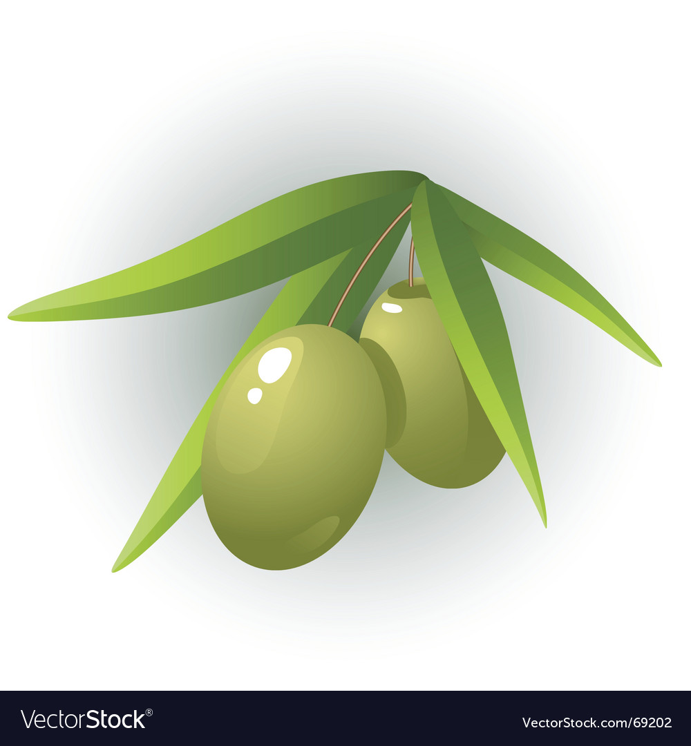 Olives vector | Price: 1 Credit (USD $1)