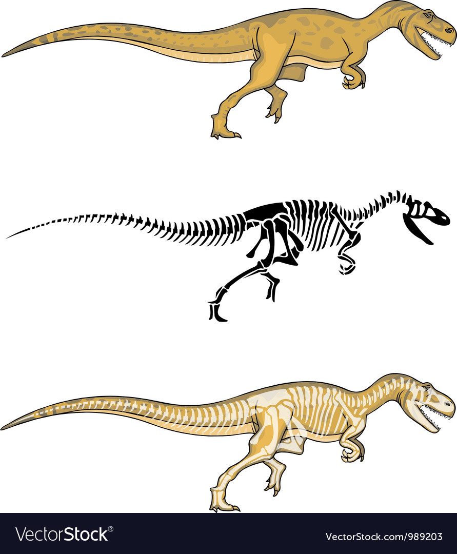 Allosaurus and skeleton vector | Price: 1 Credit (USD $1)