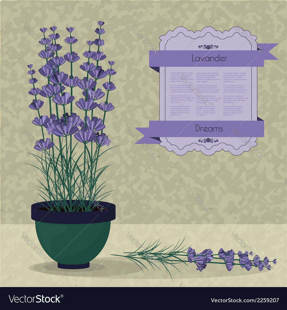Lavender in a pot on the abstract background vector | Price: 1 Credit (USD $1)