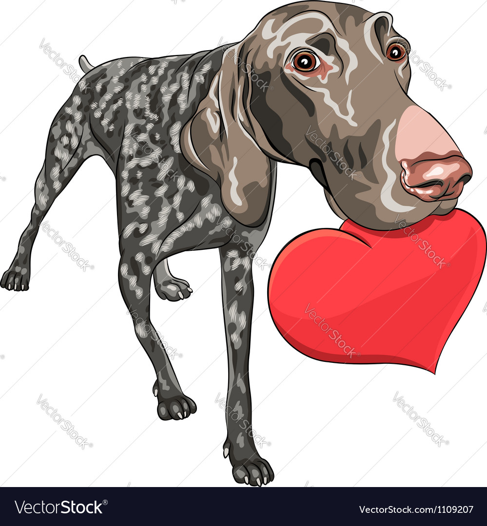 Smiling dog kurzhaar holding a red heart vector | Price: 3 Credit (USD $3)