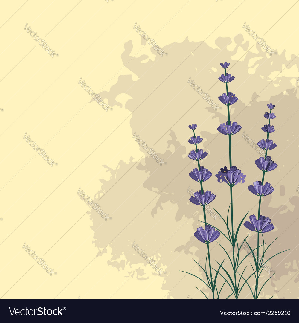 Lavender sprigs on the ink spots background vector | Price: 1 Credit (USD $1)