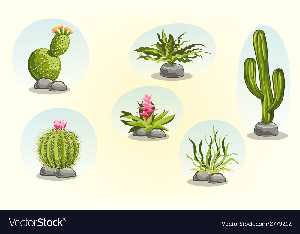 Collection of cacti and desert plants vector | Price: 1 Credit (USD $1)
