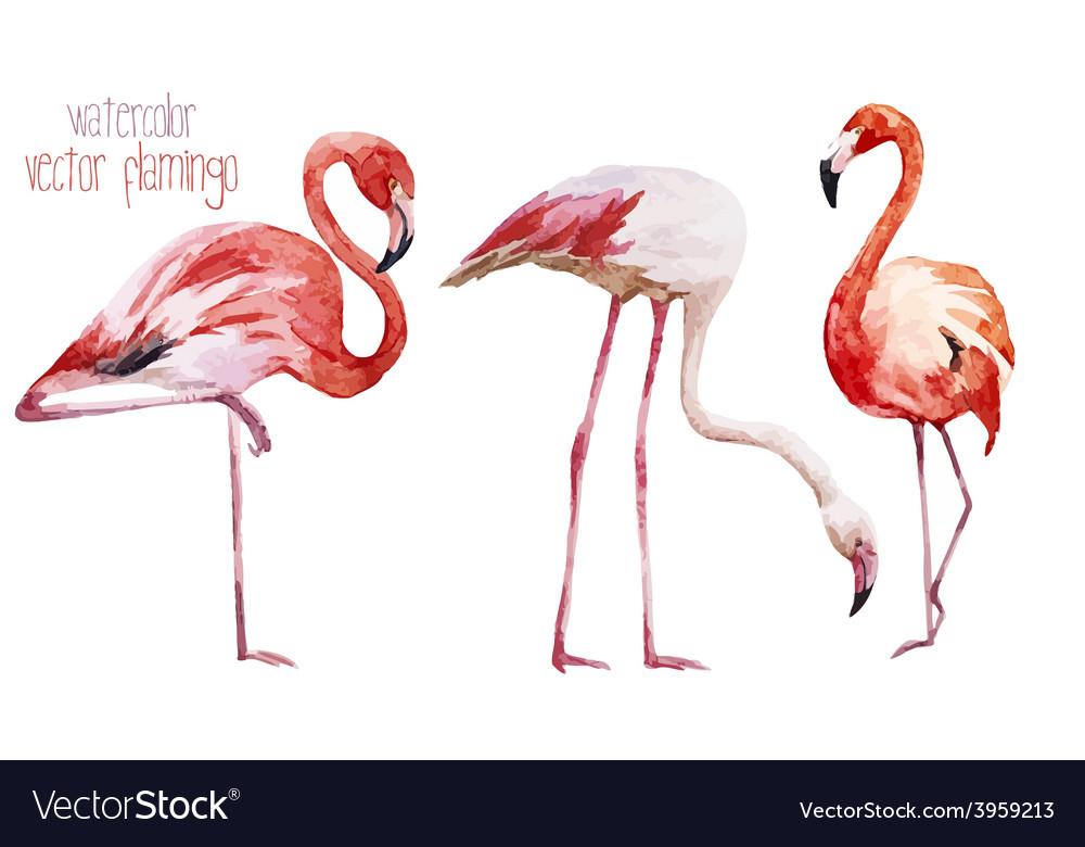 Flamingo set vector | Price: 1 Credit (USD $1)