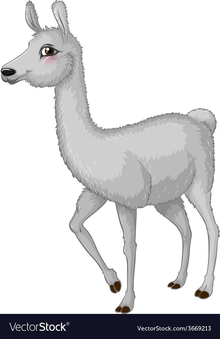 Lama vector | Price: 1 Credit (USD $1)