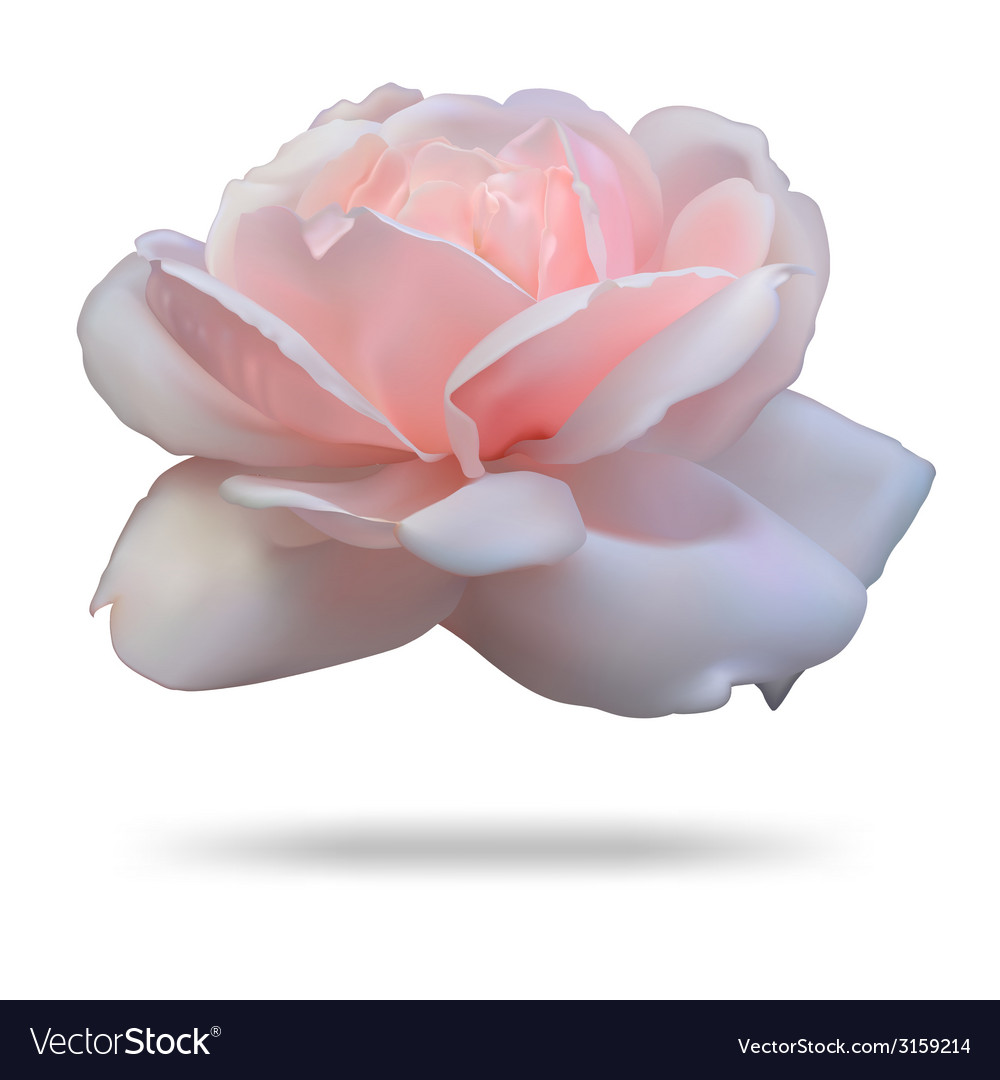 Pink rosebud isolated on white background front vector | Price: 1 Credit (USD $1)