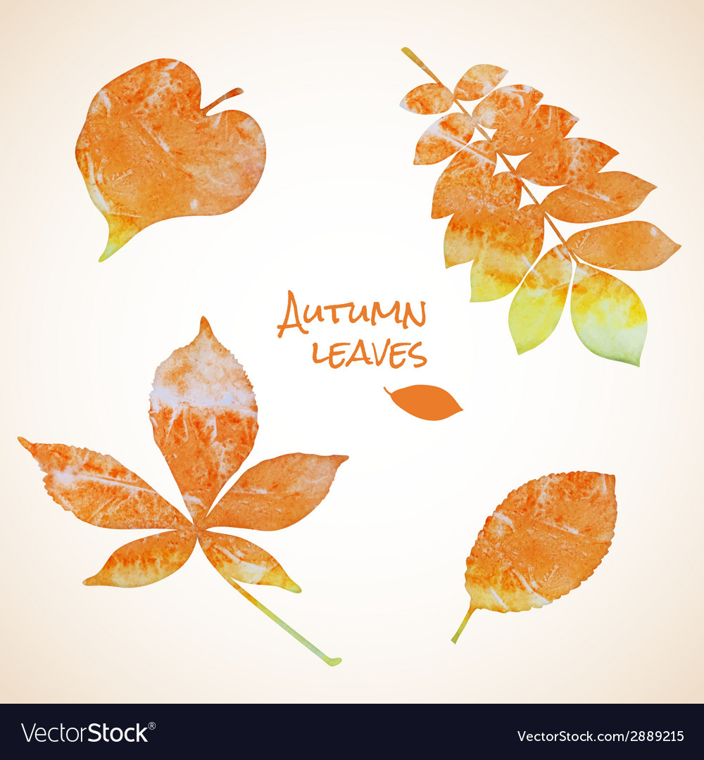 Colorful set of watercolor leaves vector | Price: 1 Credit (USD $1)