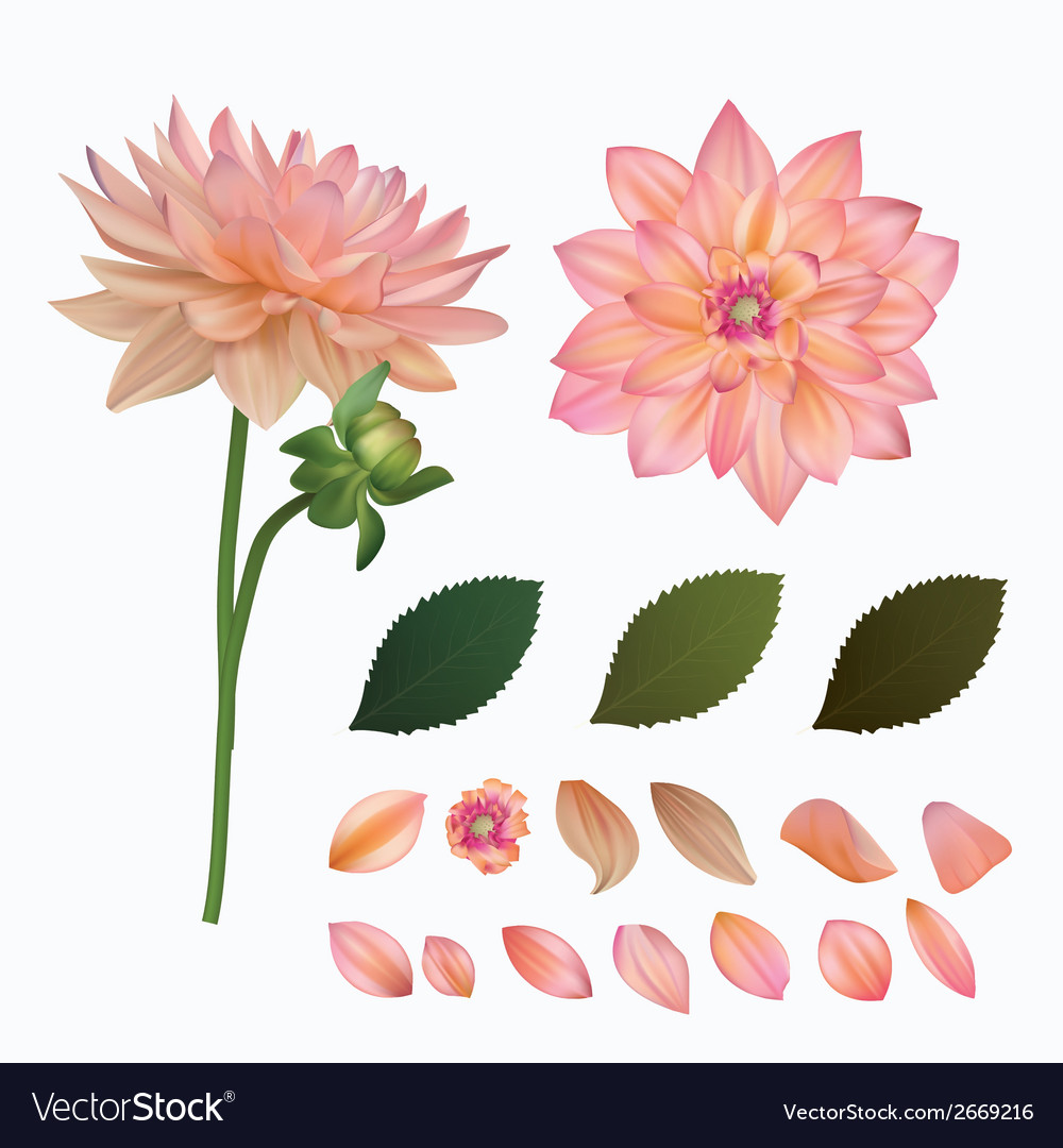 Flower mesh vector | Price: 1 Credit (USD $1)